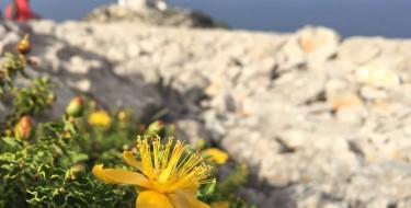 Cap Formentor